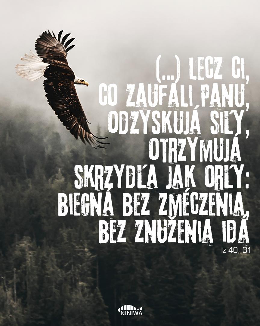 (...) lecz ci, co zaufali Panu, odzyskują siły, otrzymują skrzydła jak orły: biegną bez zmęczenia, bez znużenia idą - Iz 40, 31